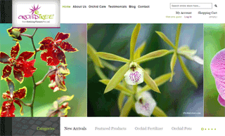 A to Z Varieties of Orchid Plants in India, Orchid Online Sale India