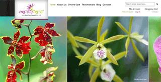 Orchid India, Orchid online India, Orchid Online sale India,