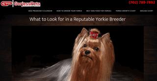 GorjessPets Yorkie Puppy Breeder